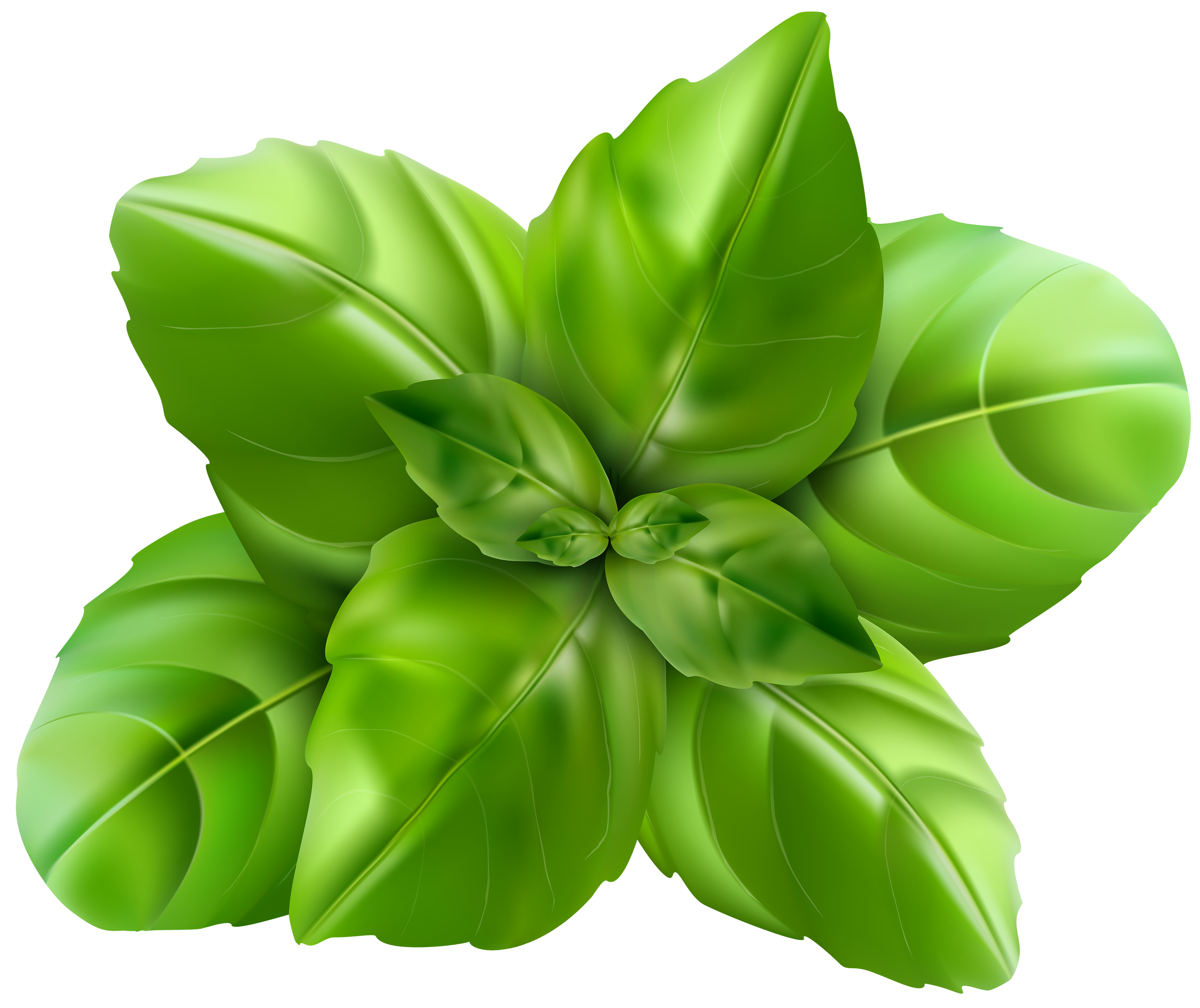 Thai flower clipart graphic library stock Basil PNG Clip Art Image | Gallery Yopriceville - High-Quality ... graphic library stock
