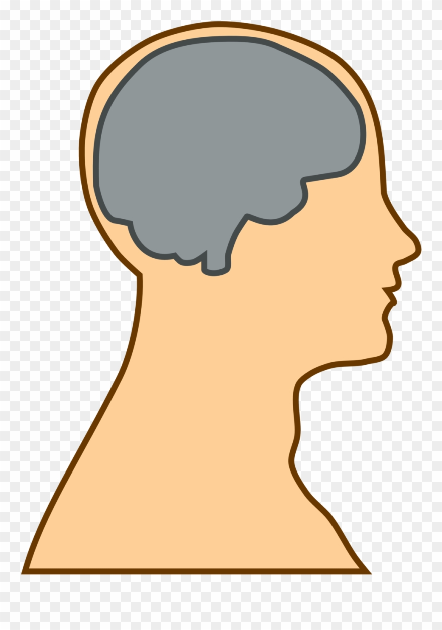 Thalamus clipart clip library library Anatomy - Thalamus And Frontal Lobe Clipart (#8661) - PinClipart clip library library