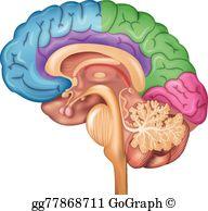 Thalamus clipart graphic royalty free Hypothalamus Clip Art - Royalty Free - GoGraph graphic royalty free