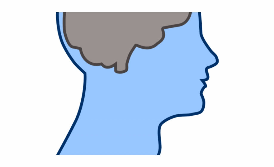 Thalamus clipart picture freeuse HD Brain Clipart Human Brain - Thalamus And Frontal Lobe ... picture freeuse