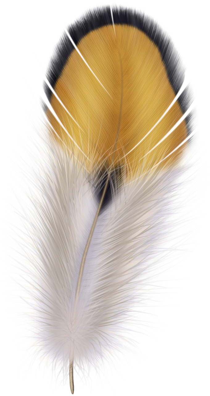 Thanksgiving chief indians clipart vector black and white feather05.png | Pinterest | Feathers, Feather illustration and Silk ... vector black and white