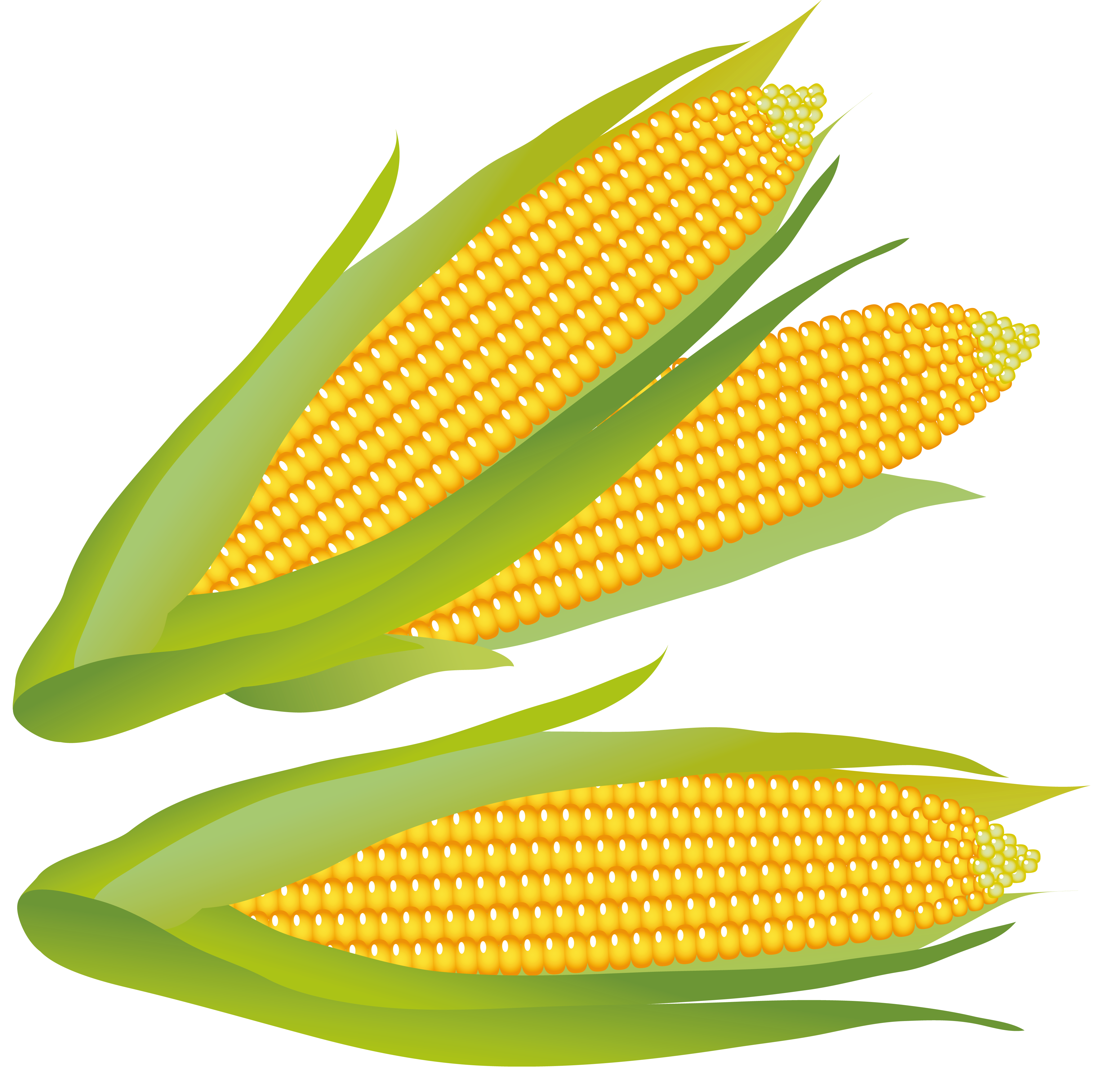 Thanksgiving corn clipart coloring page clipart freeuse download Free Corn Clipart Pictures - Clipartix clipart freeuse download