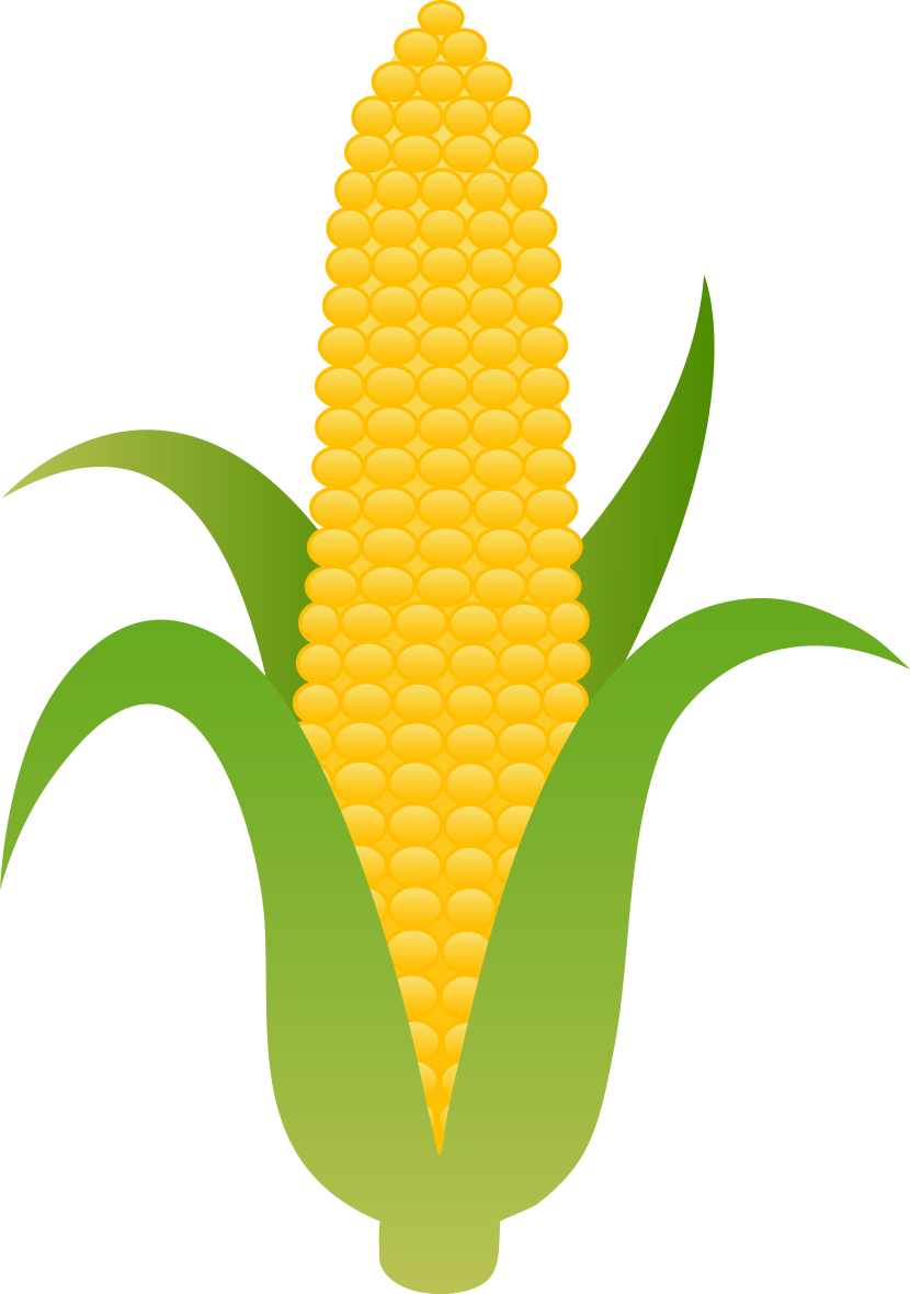 Thanksgiving corn clipart coloring page png transparent library 28+ Collection of Cute Indian Corn Clipart   High quality, free ... png transparent library