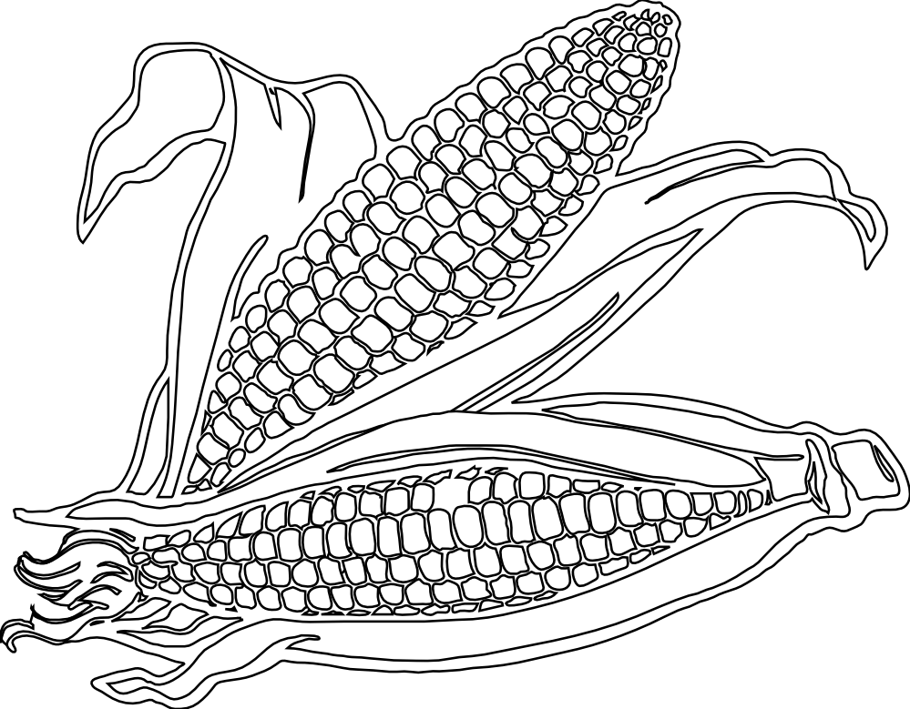 Thanksgiving corn clipart coloring page clip freeuse stock 19 Corn clipart colouring page HUGE FREEBIE! Download for PowerPoint ... clip freeuse stock