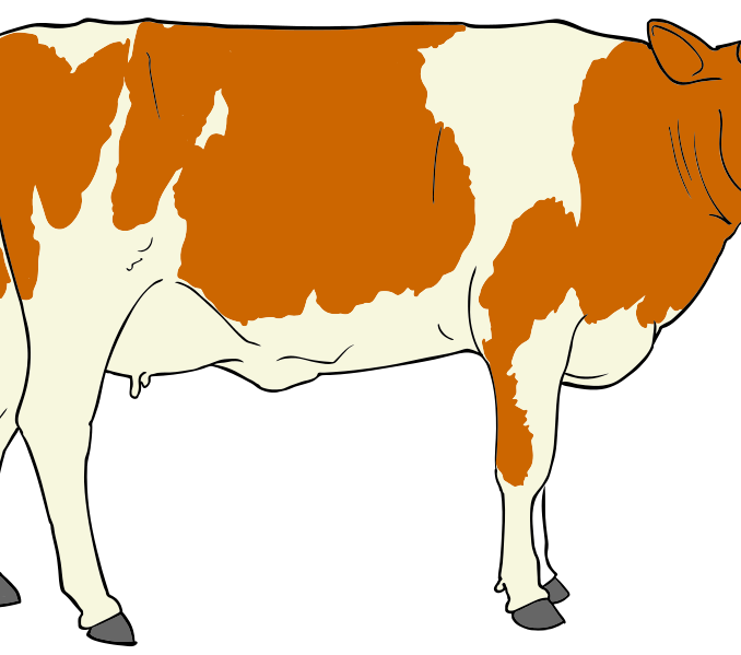 Thanksgiving cow clipart picture royalty free library Cow images clipart cow clipart 4 clipart panda free clipart images ... picture royalty free library