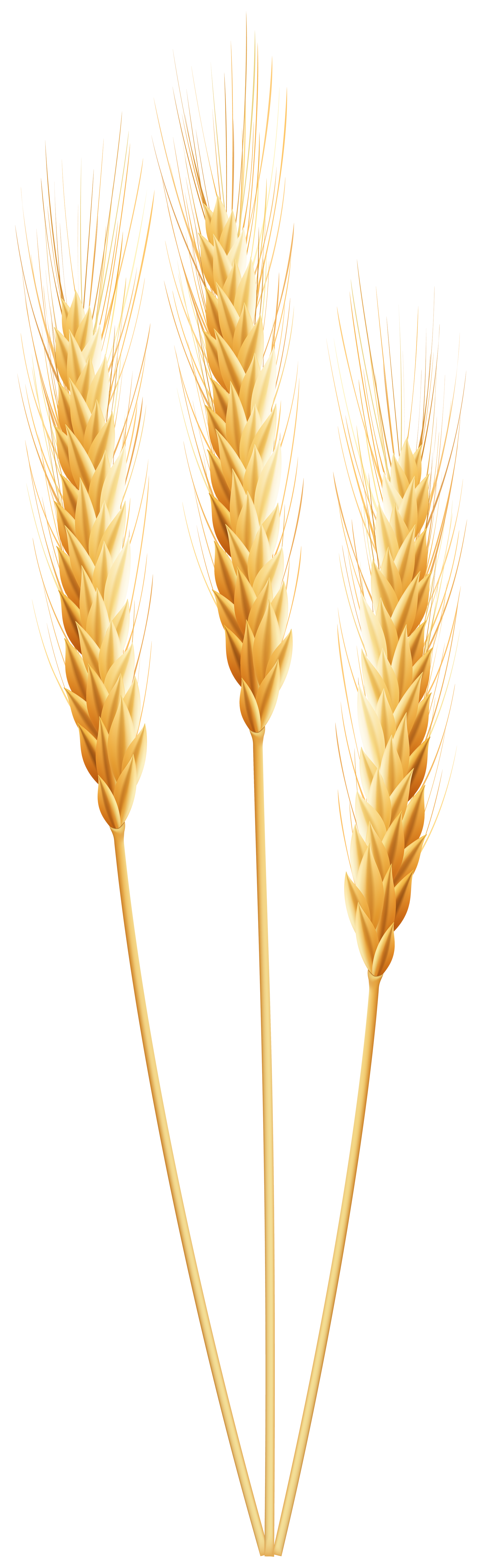 Thanksgiving wheat clipart graphic freeuse stock Wheat PNG Clip Art Image | ClipArt | Pinterest | Art images, Clip ... graphic freeuse stock