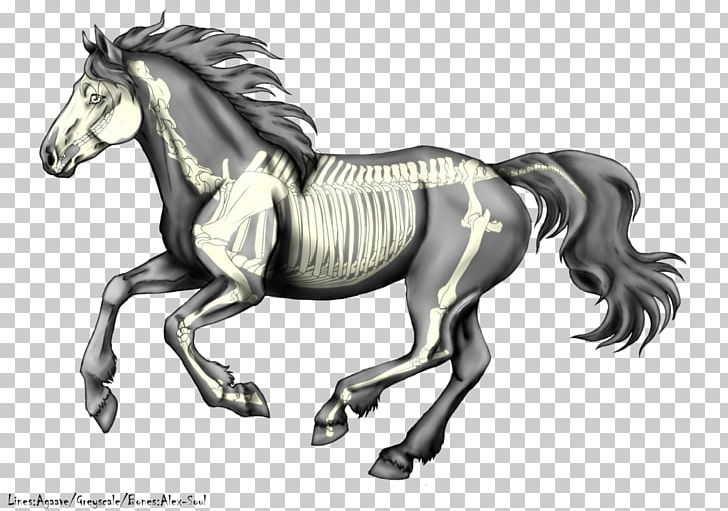 The canter model clipart clip royalty free Stallion Canter And Gallop Mustang Pony Colt PNG, Clipart ... clip royalty free
