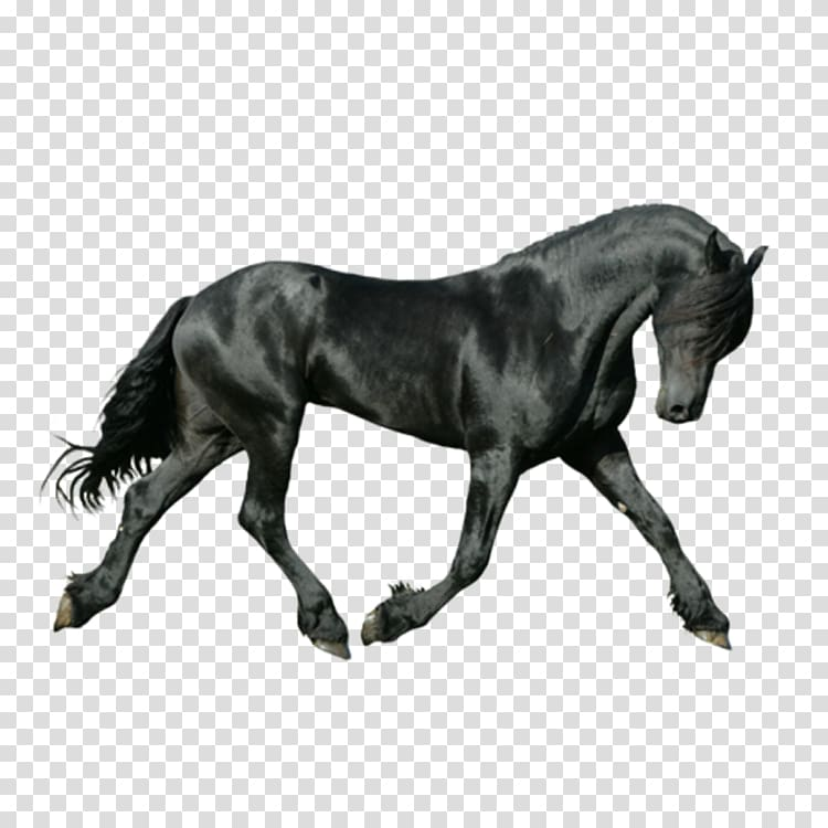 The canter model clipart image freeuse stock Friesian horse On the bit Canter and gallop Iron-on, Dark ... image freeuse stock