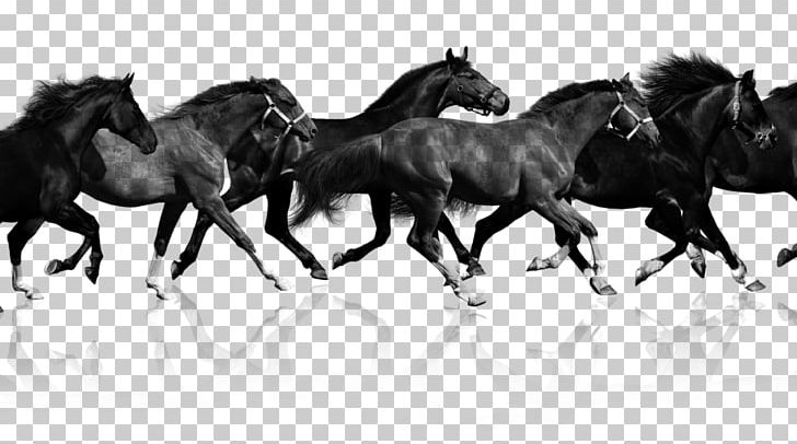 The canter model clipart clip stock Mustang Haflinger Pony Equestrian Canter And Gallop PNG ... clip stock