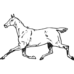 The canter model clipart picture transparent Cantering horse clipart, cliparts of Cantering horse free ... picture transparent