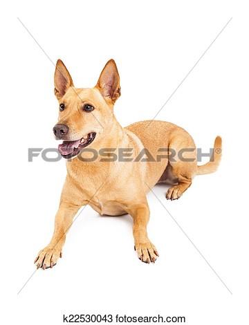The carolina dog clipart vector stock The carolina dog clipart - ClipartFest vector stock