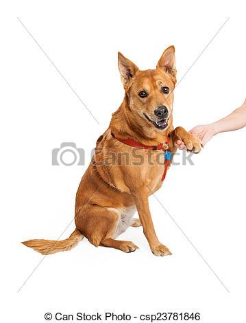 The carolina dog clipart clip art royalty free stock The carolina dog clipart - ClipartFest clip art royalty free stock