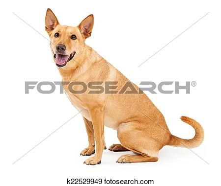 The carolina dog clipart clipart The carolina dog clipart - ClipartFest clipart