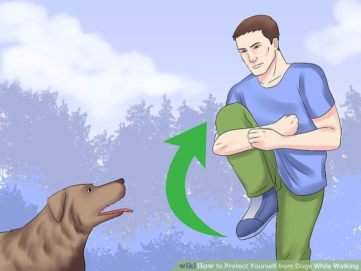 The chosen dog out of a group clipart jpg transparent download 4 Ways to Protect Yourself from Dogs While Walking - wikiHow jpg transparent download
