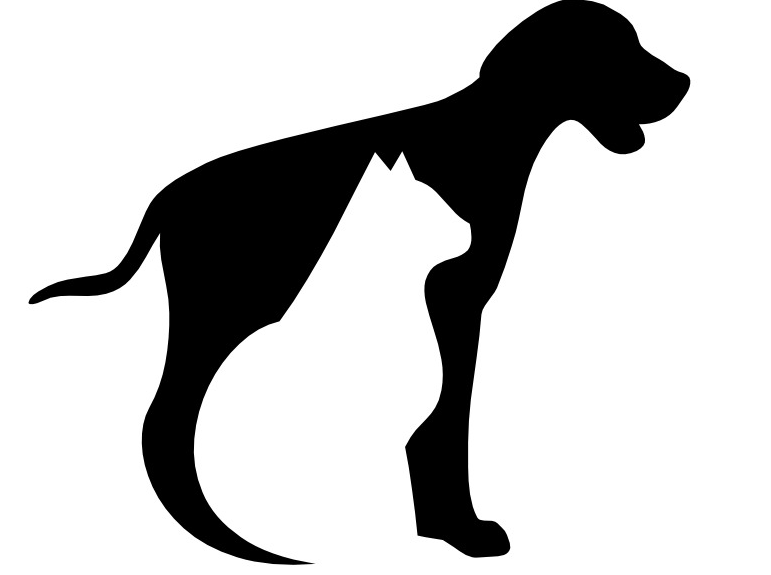 The chosen dog out of a group clipart