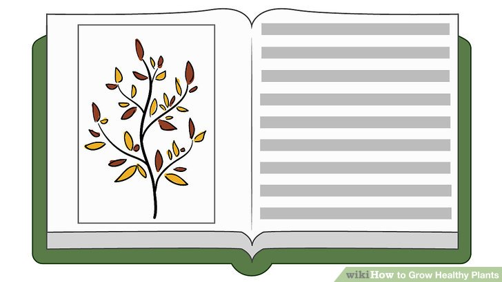 The word grow written in a flower clipart banner royalty free How to Grow Healthy Plants: 10 Steps (with Pictures) - wikiHow banner royalty free