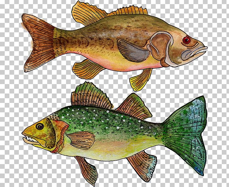 Thimbleberry clipart graphic royalty free Tilapia Donner Lake Salmon Thimbleberry PNG, Clipart, Bass ... graphic royalty free