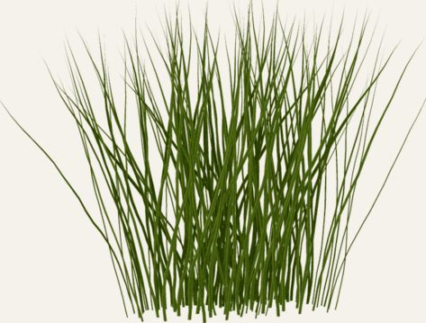 Thin grass clipart clip library Tall grass clipart - ClipartFest clip library