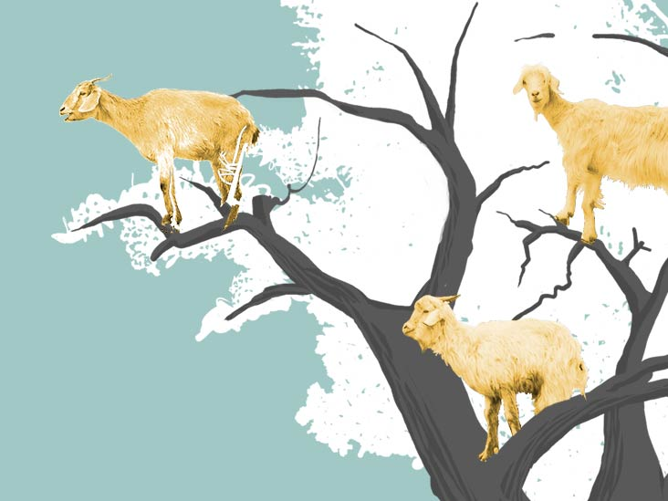 Things you can make out of goat milk clipart picture freeuse Is Goat\'s Milk Right for You? picture freeuse