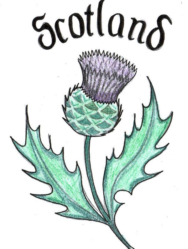 Thistle clipart scotland image library stock Scottish Thistle Clipart Vector, Clipart, PSD - peoplepng.com image library stock