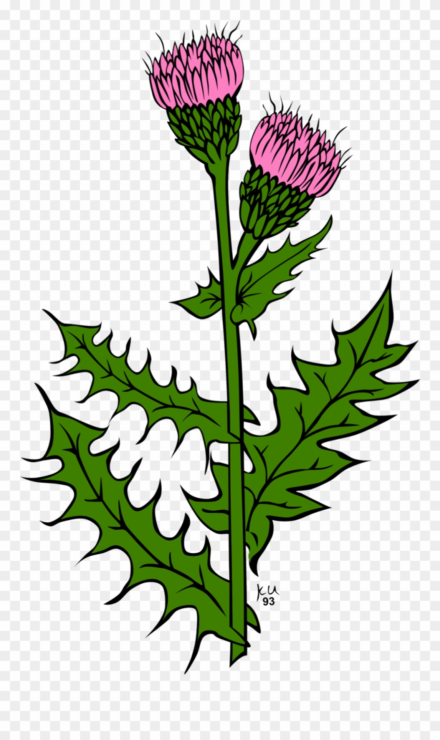 Thistle clipart scotland png royalty free stock Ku Cirsium Arvense - Scottish Thistle Clip Art - Png ... png royalty free stock