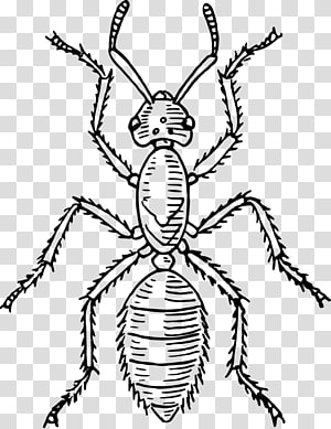 Thorax clipart graphic free Thorax transparent background PNG cliparts free download ... graphic free