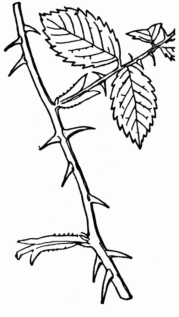 Thorn clipart banner black and white library Thorn Clipart Black And White – Letters intended for Thorn ... banner black and white library