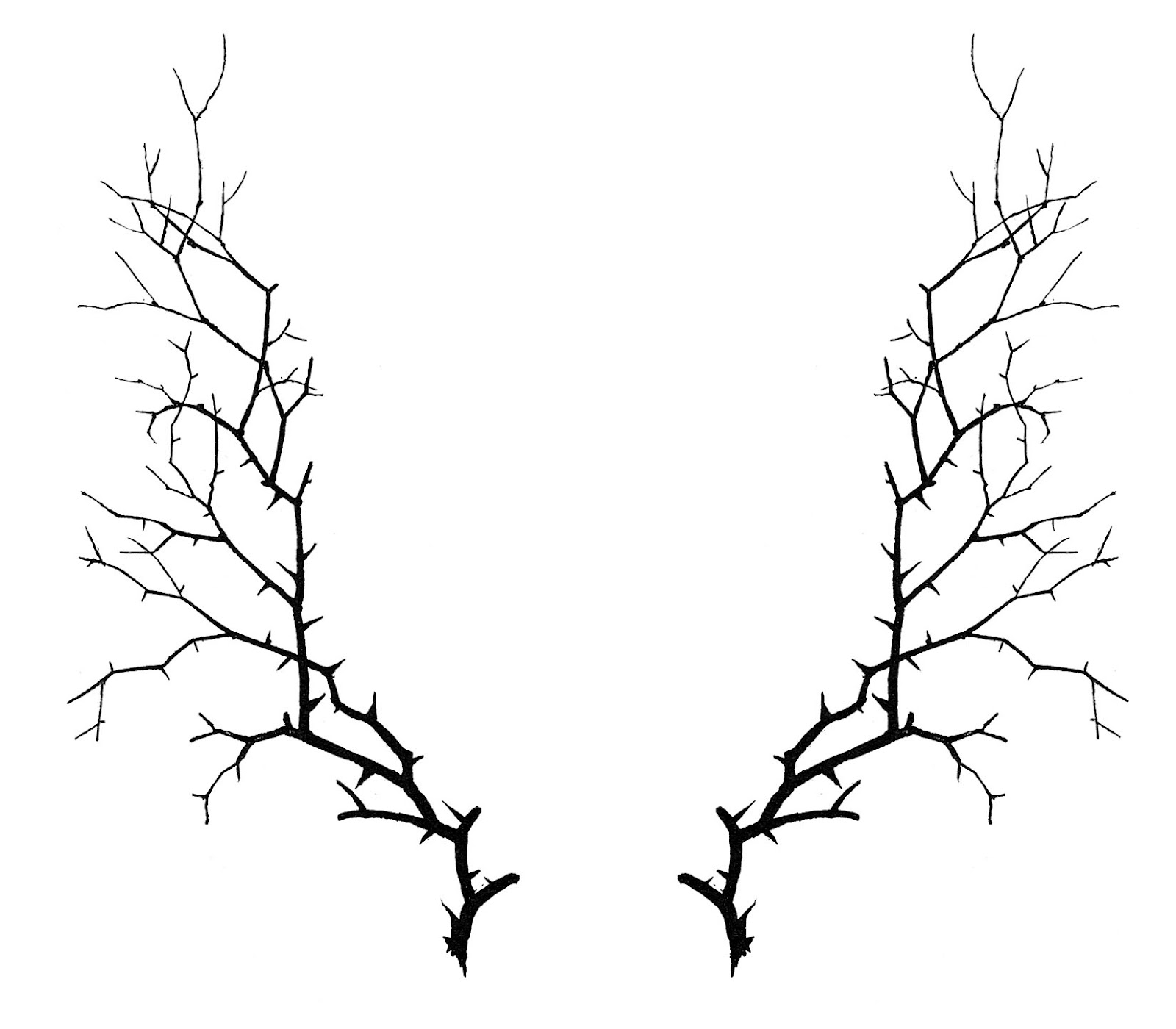 Thorn vine clipart clip art free download Free Thorn Cliparts, Download Free Clip Art, Free Clip Art ... clip art free download