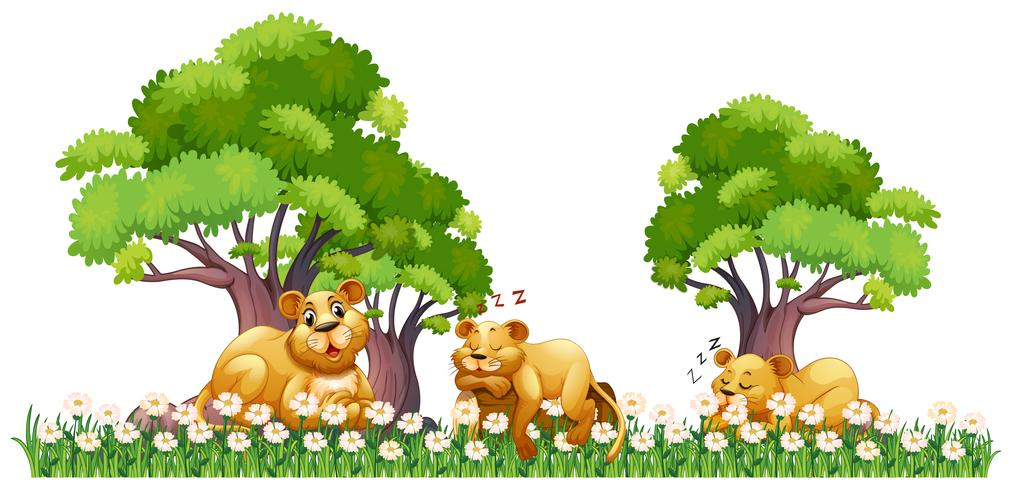 Three lions clipart jpg download Three lions resting in the field Vector - Download Free ... jpg download