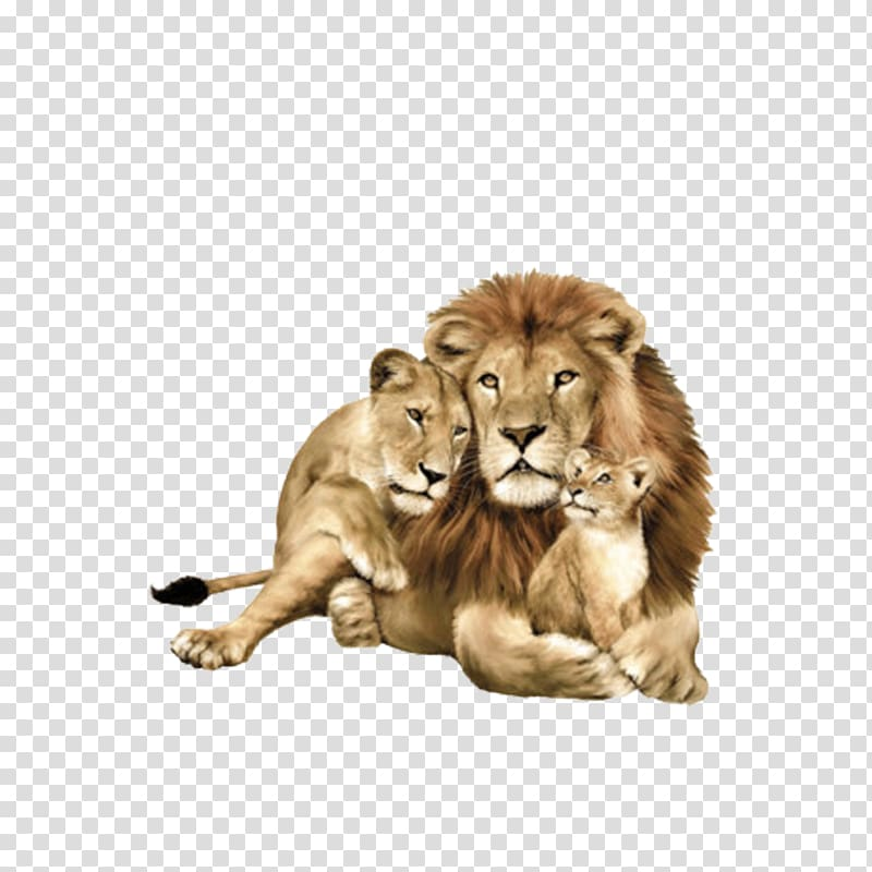 Three lions clipart svg library download Family of three lion illustration, Lipizzan Lionhead rabbit ... svg library download