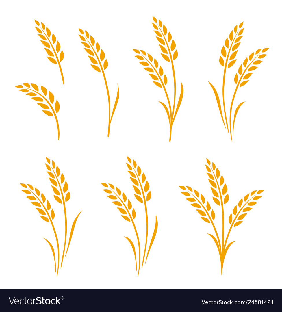 Three sprigs of whaeta clipart clipart stock Hand drawn set of golden wheat ears vector image clipart stock