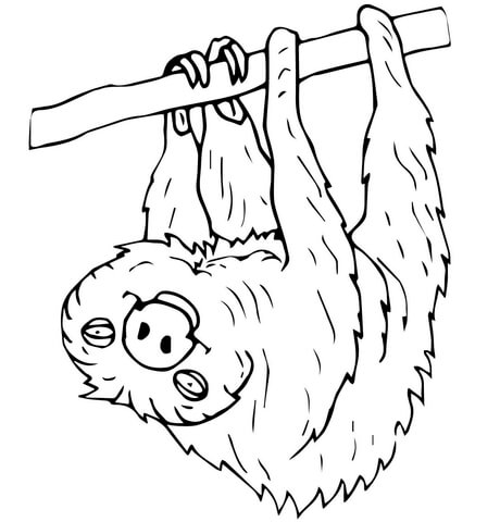 Three toed sloth clipart kids clip art royalty free download Two Toed Sloth coloring page | Free Printable Coloring Pages clip art royalty free download