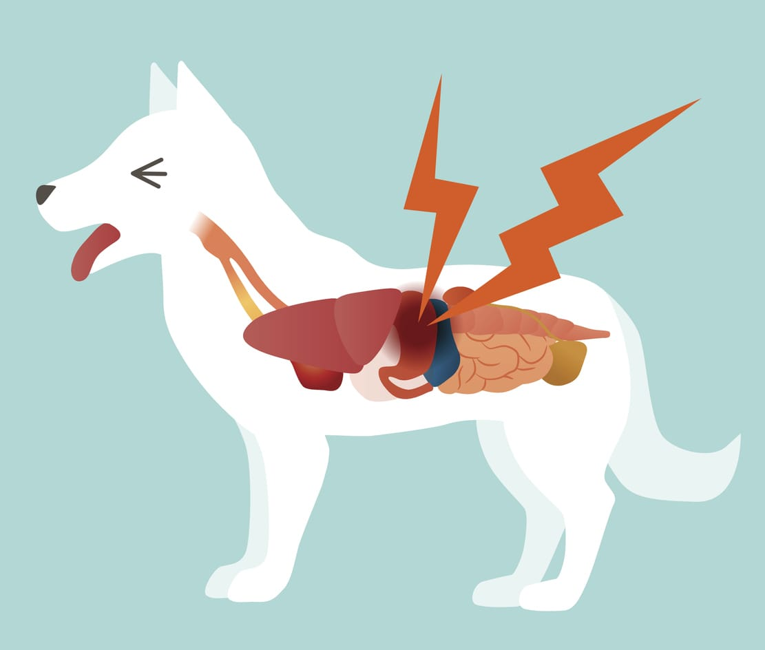 Throw up your hands and quit clipart clip royalty free Dog Vomiting Causes and Treatment - NomNomNow clip royalty free