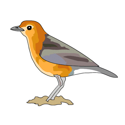 Thrush clipart picture black and white download Orange-headed Thrush | Royalty free bird clipart of Orange-h ... picture black and white download