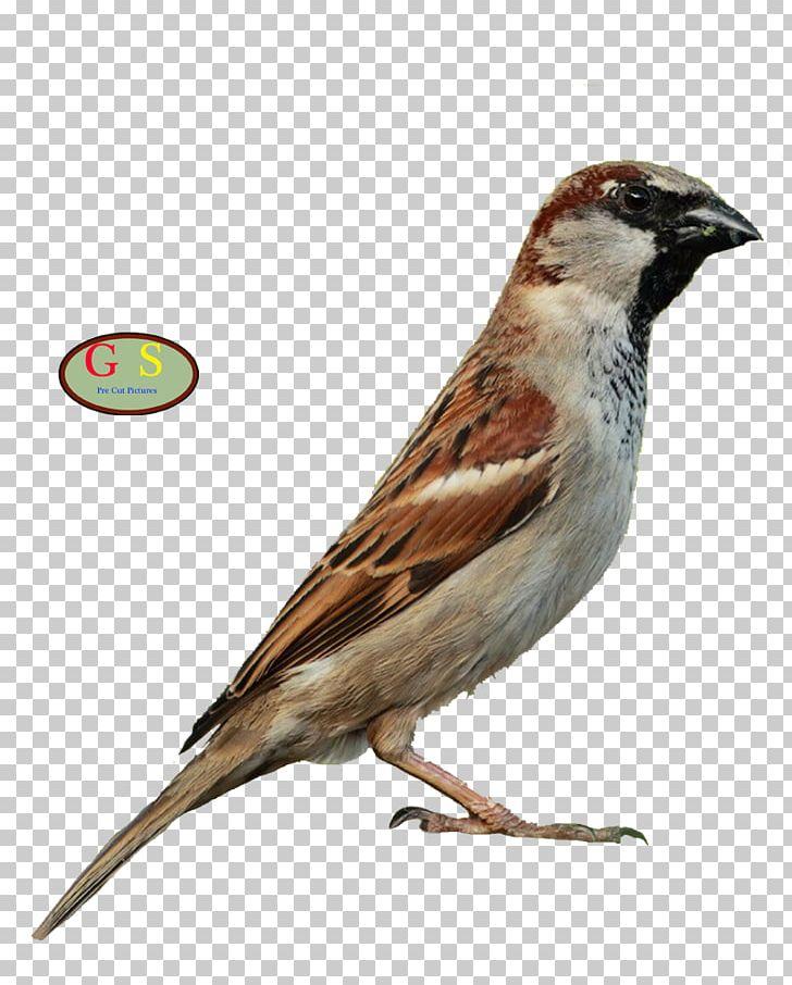Thrush clipart banner freeuse stock House Sparrow Bird Song Thrush Mistle Thrush Bonin Thrush ... banner freeuse stock