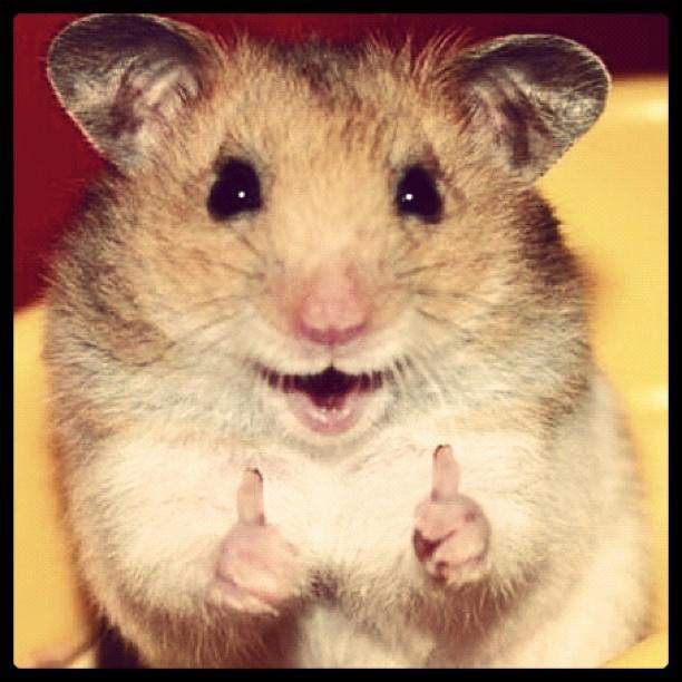 Thumbs up funny clipart mouse png stock 20 Very Funny Thumb Pictures And Images png stock
