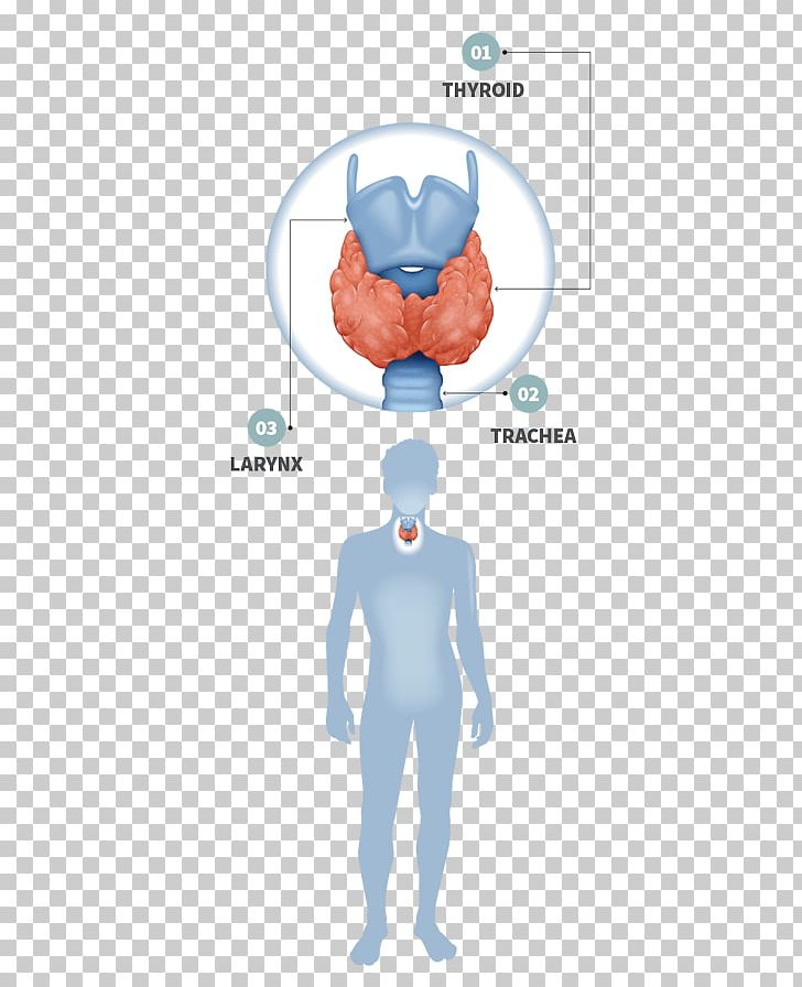 Thyroid disease clipart image royalty free Thyroid Disease Gland Hypothyroidism Endocrine System PNG ... image royalty free