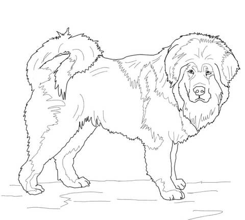Tibetan mastiff clipart png black and white download Tibetan Mastiff coloring page | Free Printable Coloring Pages png black and white download