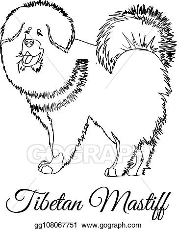 Tibetan mastiff clipart clipart transparent Vector Art - Tibetan mastiff dog coloring. Clipart Drawing ... clipart transparent