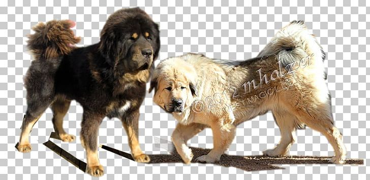 Tibetan mastiff clipart clipart library download Giant Dog Breed Tibetan Mastiff English Mastiff PNG, Clipart ... clipart library download