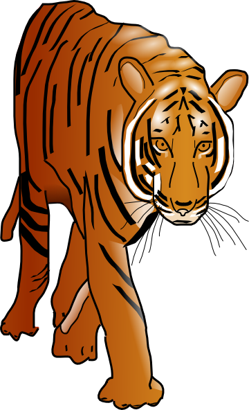 Tiger 1 color clipart clip royalty free Color Tiger Clip Art at Clker.com - vector clip art online ... clip royalty free