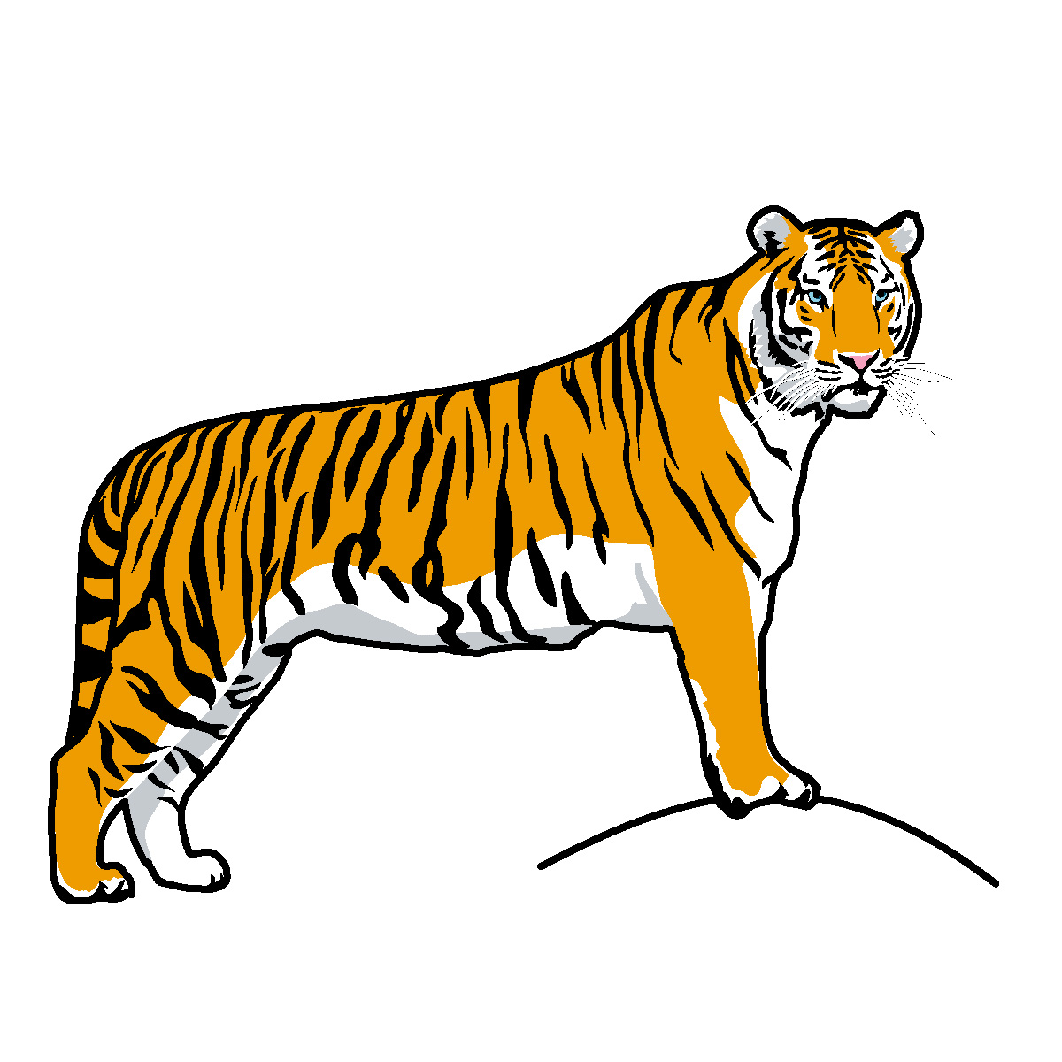 Tiger 1 color clipart banner black and white Clip Art: Big Cats: Tiger Color 1 | abcteach banner black and white