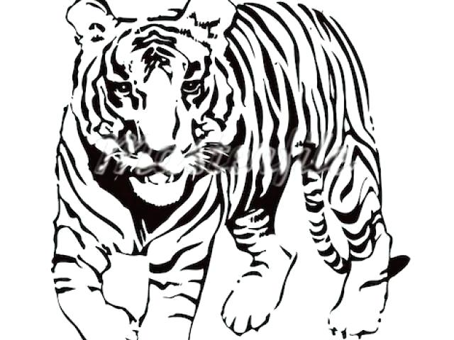 Tiger clipart line drawing picture black and white download Tiger Head Line Drawing | Free download best Tiger Head Line ... picture black and white download