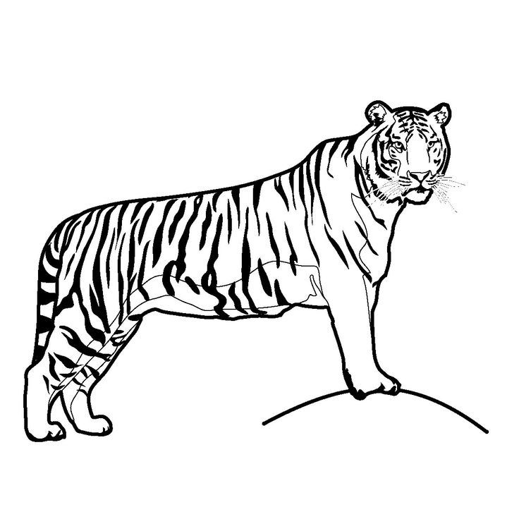 Tiger clipart line drawing clip freeuse download Free Black And White Tiger Clipart, Download Free Clip Art ... clip freeuse download