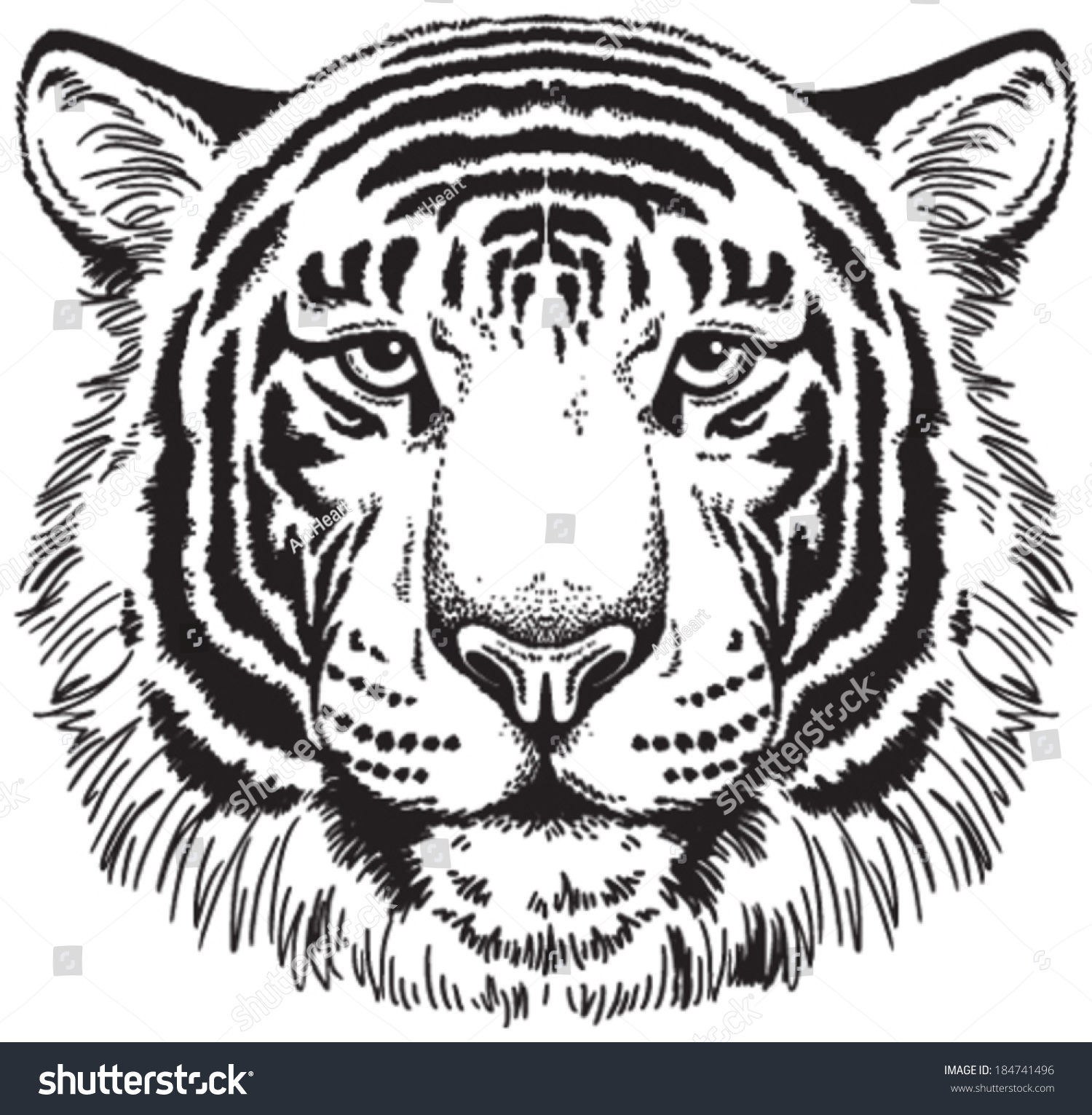 Tiger face clipart black and white transparent stock Tiger Face Clipart Black And White (98+ images in Collection ... transparent stock
