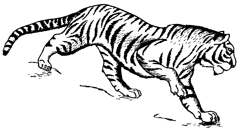 Tiger in jungle clipart black and white jpg black and white library Free Tiger Clipart, 1 page of Public Domain Clip Art ... jpg black and white library