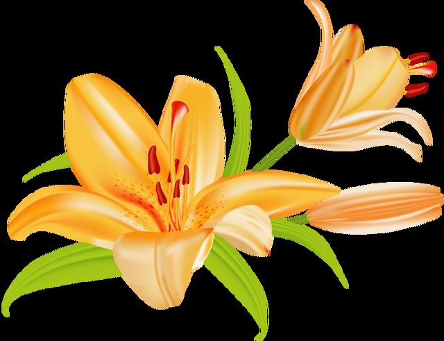Tiger lily flower clipart svg transparent download Lily Flower Clipart   Free download best Lily Flower Clipart ... svg transparent download