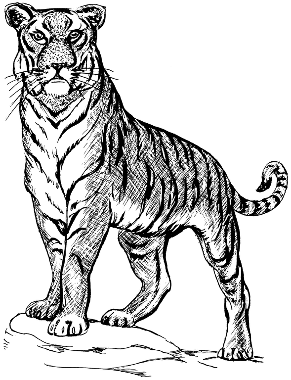 Tiger on a rock clipart clip art free File:Tiger 3 (PSF).png - Wikimedia Commons clip art free
