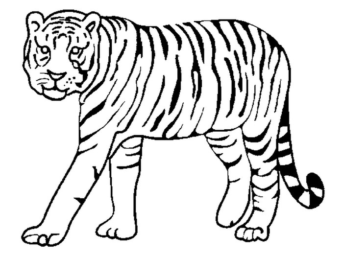 Tiger outline clipart image royalty free stock Tiger Drawing Outline | Free download best Tiger Drawing ... image royalty free stock