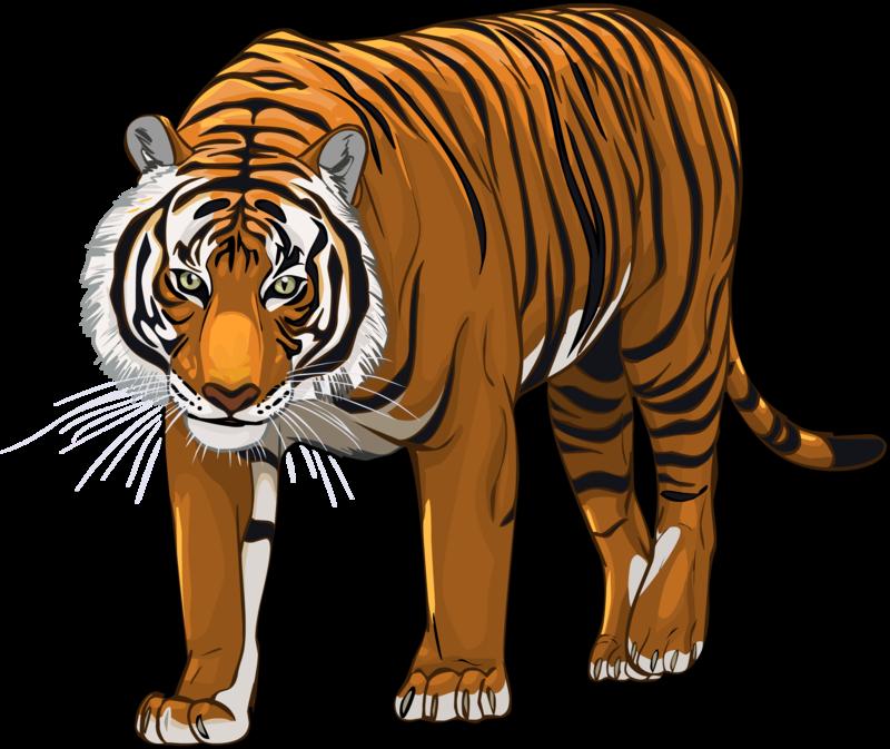 Tiger png clipart svg transparent stock Tiger PNG Transparent Images (37 Pics) - Free Transparent ... svg transparent stock